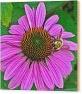 Cone Flower An Bumble  Wood Print