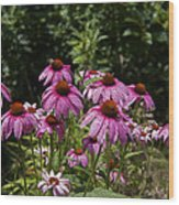 Cone Flower And Bee Wood Print