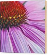 Cone Flower Blossom  Wood Print