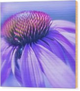 Cone Flower In Pastels  Wood Print