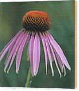 Cone Flower In Vertical Format Wood Print