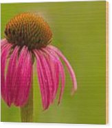 Coneflower - Summer Color Wood Print