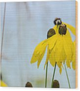 Coneflower And Bee 2  Wood Print