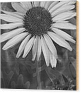 Coneflower And Dusty Miller Bw Wood Print