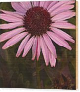 Coneflower And Dusty Miller Wood Print
