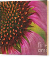 Coneflower Wood Print by Darren Fisher