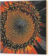 Coneflower Heart Wood Print