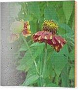 Coneflower Vintage Wood Print