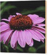 Coneflower With Bug Wood Print