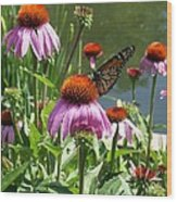 Coneflower With Butterfly Wood Print