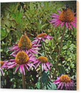 Coneflowers Wood Print by Annette Allman