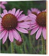 Coneflowers - Echinacea Purpurea Wood Print