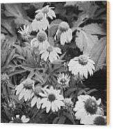 Coneflowers Echinacea Rudbeckia Bw Wood Print by Rich Franco