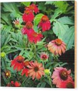 Coneflowers Echinacea Rudbeckia Wood Print by Rich Franco