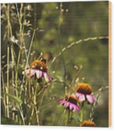 Coneflowers Weeds And Bee Wood Print