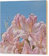 Confectioners Pink Wood Print