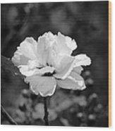 Confederate Rose Bw Wood Print