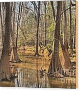 Congaree National Park Wood Print
