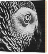 Congo African Grey 8 Wood Print