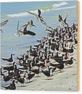Congregating Skimmers Wood Print