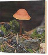 Conical Wax Cap Mushroom Wood Print