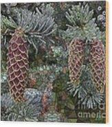 Conifer Cones Wood Print