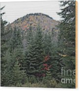 Conifer Country Wood Print