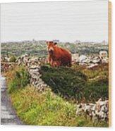 Connemara Cow Wood Print