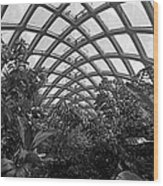 Conservatory Denver Botanic Garden Black And White  Wood Print