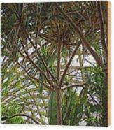 Conservatory Denver Botanic Gardens Wood Print