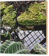 Conservatory Reflections Wood Print