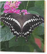 Constantines Swallowtail Wood Print