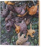 Starfish Constellation Wood Print