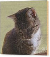 Contemplating A Pounce Wood Print by Diana Besser