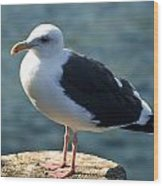 Contemplating Life Of A Sea Gull Wood Print