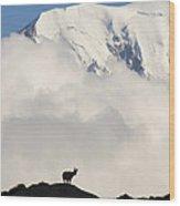 Contemplating Mont Blanc Wood Print