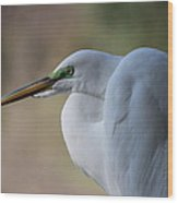 Contemplation Of Great Egret Wood Print