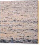Contemplative Seagull Wood Print