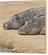 Contented Hippos Wood Print
