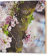 Contrast. Pink Spring In Amsterdam Wood Print
