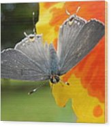 Contrasting Butterfly Wood Print