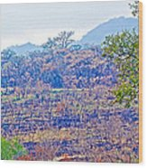 Controlled Burn Area In Kruger National Park-south Africa Wood Print