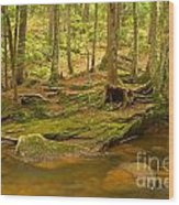 Cook Forest Rocks And Roots Wood Print