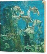 Cool Aquarium Wood Print by Ray Warren