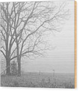 Cool Damp Foggy Wood Print
