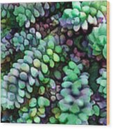 Cool Hued Burro's Tails In The Hot Desert Wood Print