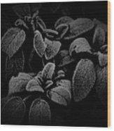 Cool Sage Wood Print by John Monteath