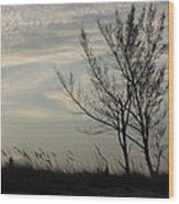 Cool Winters Day Wood Print