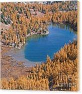 Cooney Lake Larches Wood Print