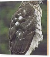 Cooper Hawk Side Wood Print